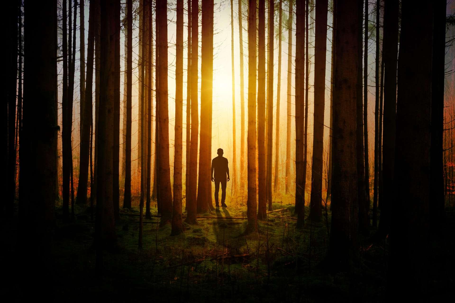 man in woods trees silhouette shadow pexels-photo-1114897