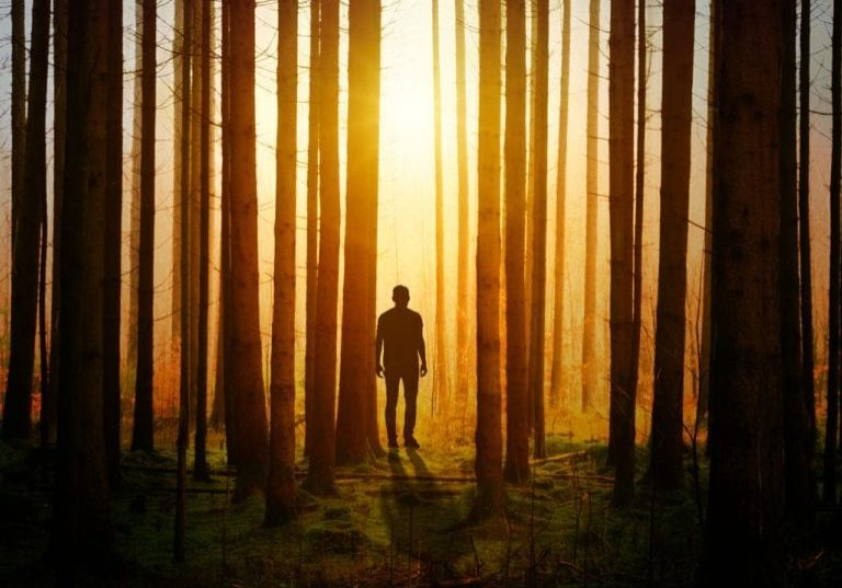 man in woods trees silhouette shadow pexels-photo-1114897